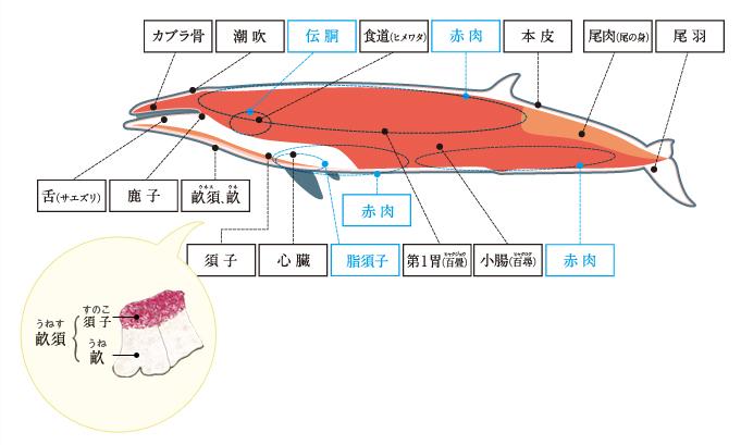 作り方 鯨 ベーコン